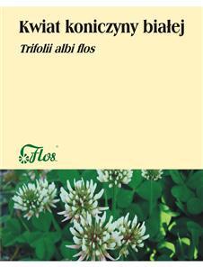 Koniczyna biała kwiat